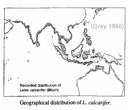 Barramundi Distribution after Grey 1986