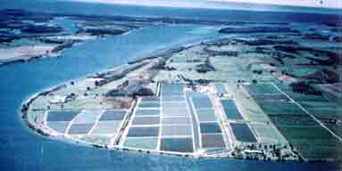 True Blue Prawn Farm in Yamba NSW is one of the oldest farms in the country. The pioneering ethics have sustained this family business through a few hard times. A fairly rare commodity in Australian Aquaculture