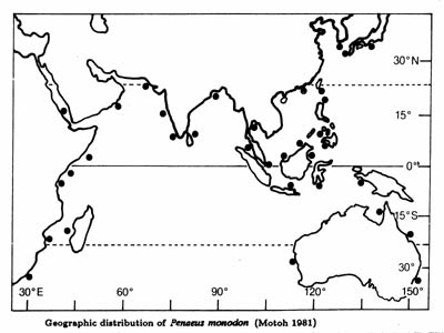 P. monodon distribution map